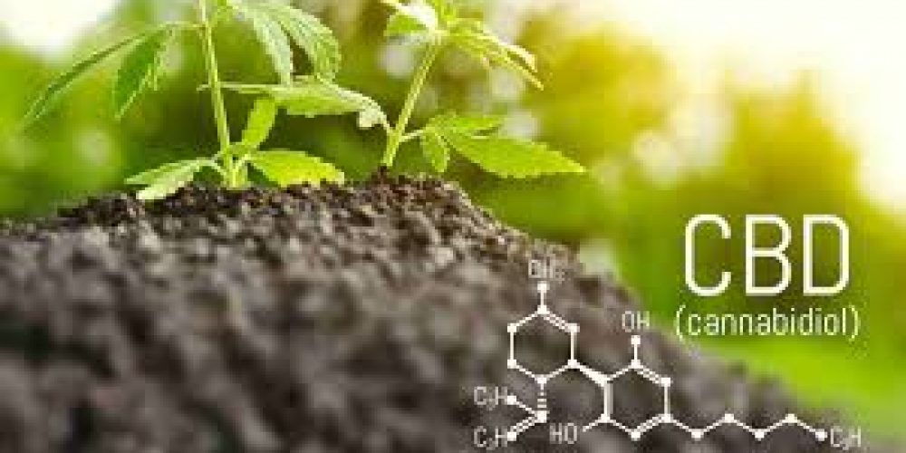 How Does CBD Provide Relief From Stress?
